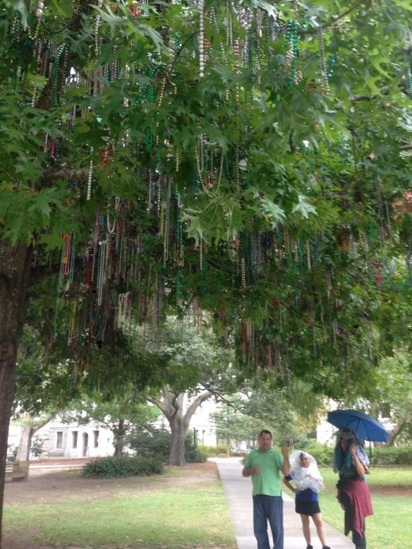 Mardi Gras tree at Tulane
